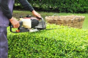 a-gardener-trimming-hedges