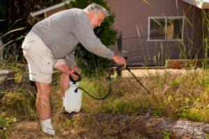 a-senior-spraying-herbicide-on-weeds