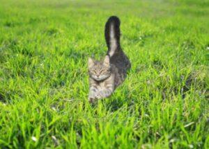 cat-running-in-the-garden