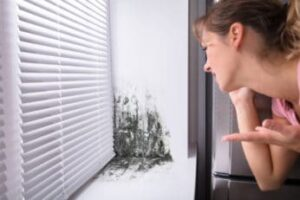 mould on the window sill