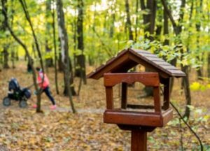 table-top-feeder-in-a-wooded-area