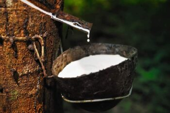 Sap from rubber tree