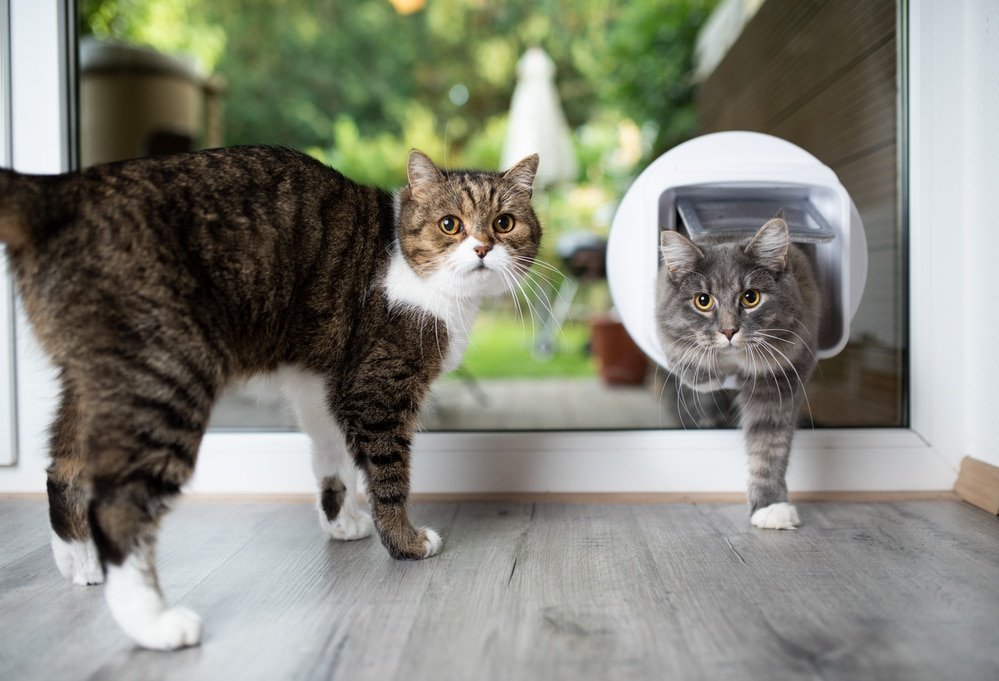 how does a microchip cat flap work