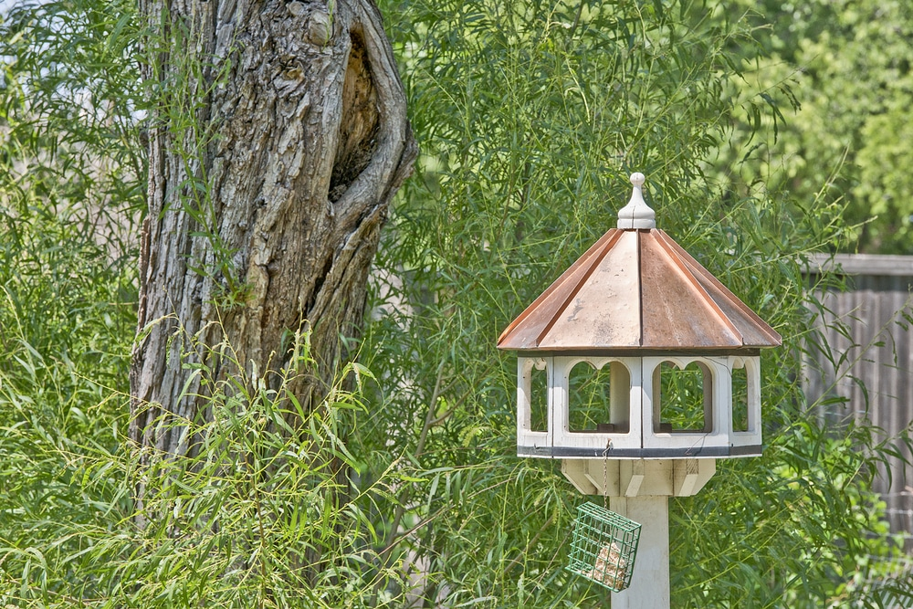 How to Make a Bird Table Pigeon Proof