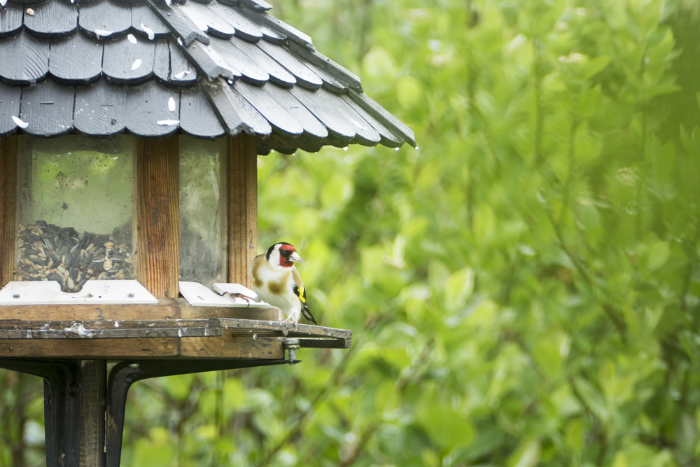 How to Secure a Bird Table to the Ground