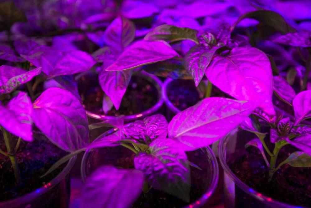 best-led-grow-lights-uk