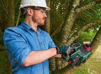 cutting a tree branch