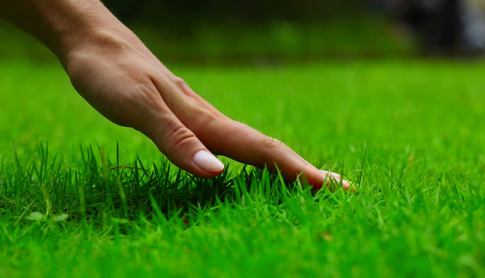 how to feed a lawn