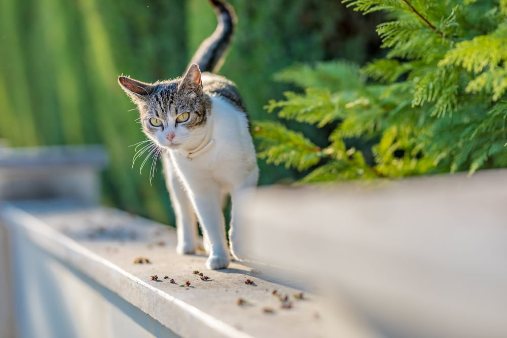 how to make cat repellent