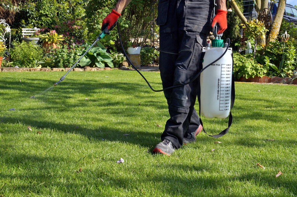 how to make weed killer