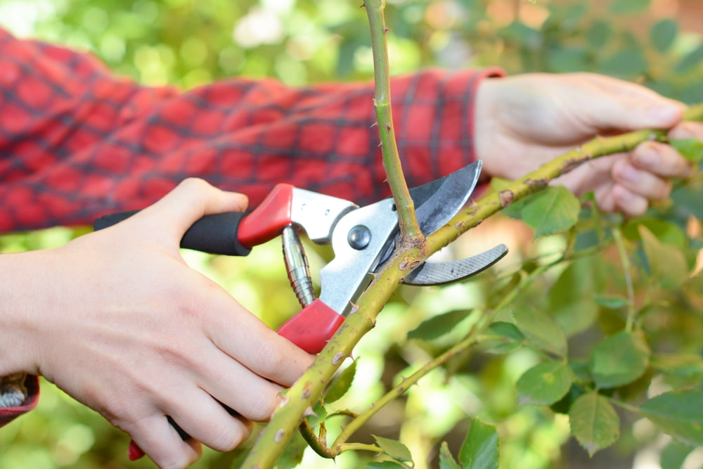 what are secateurs used for
