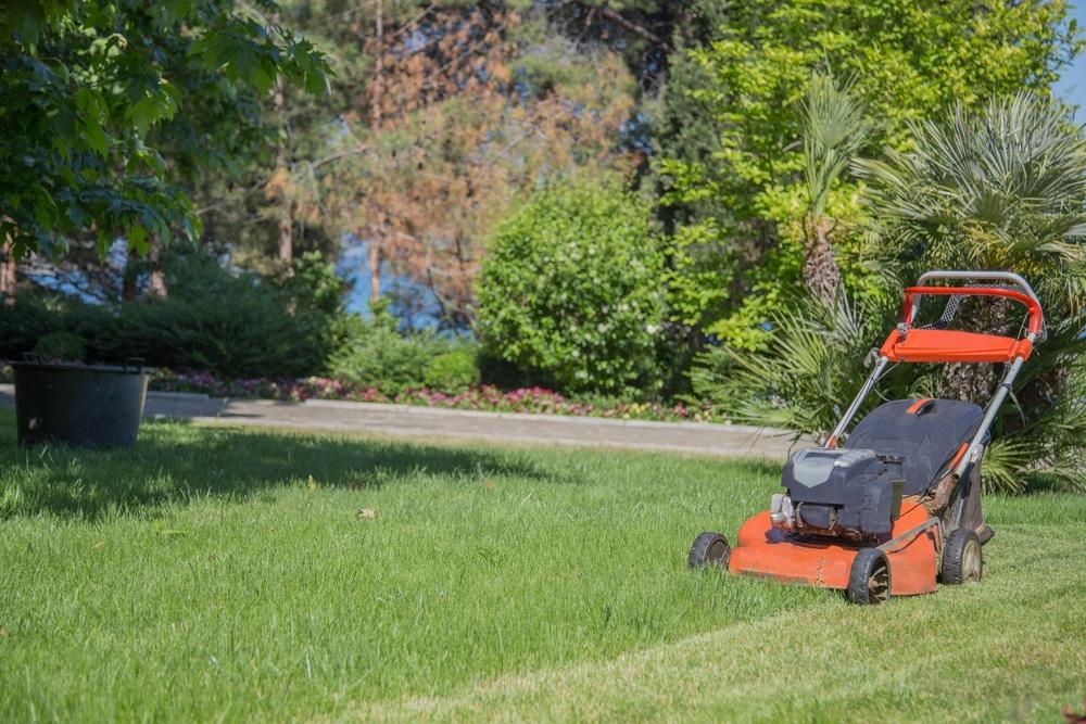 what does a lawn scarifier do