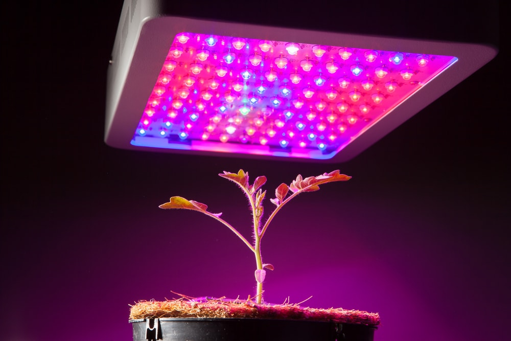 How Grow Lights Work